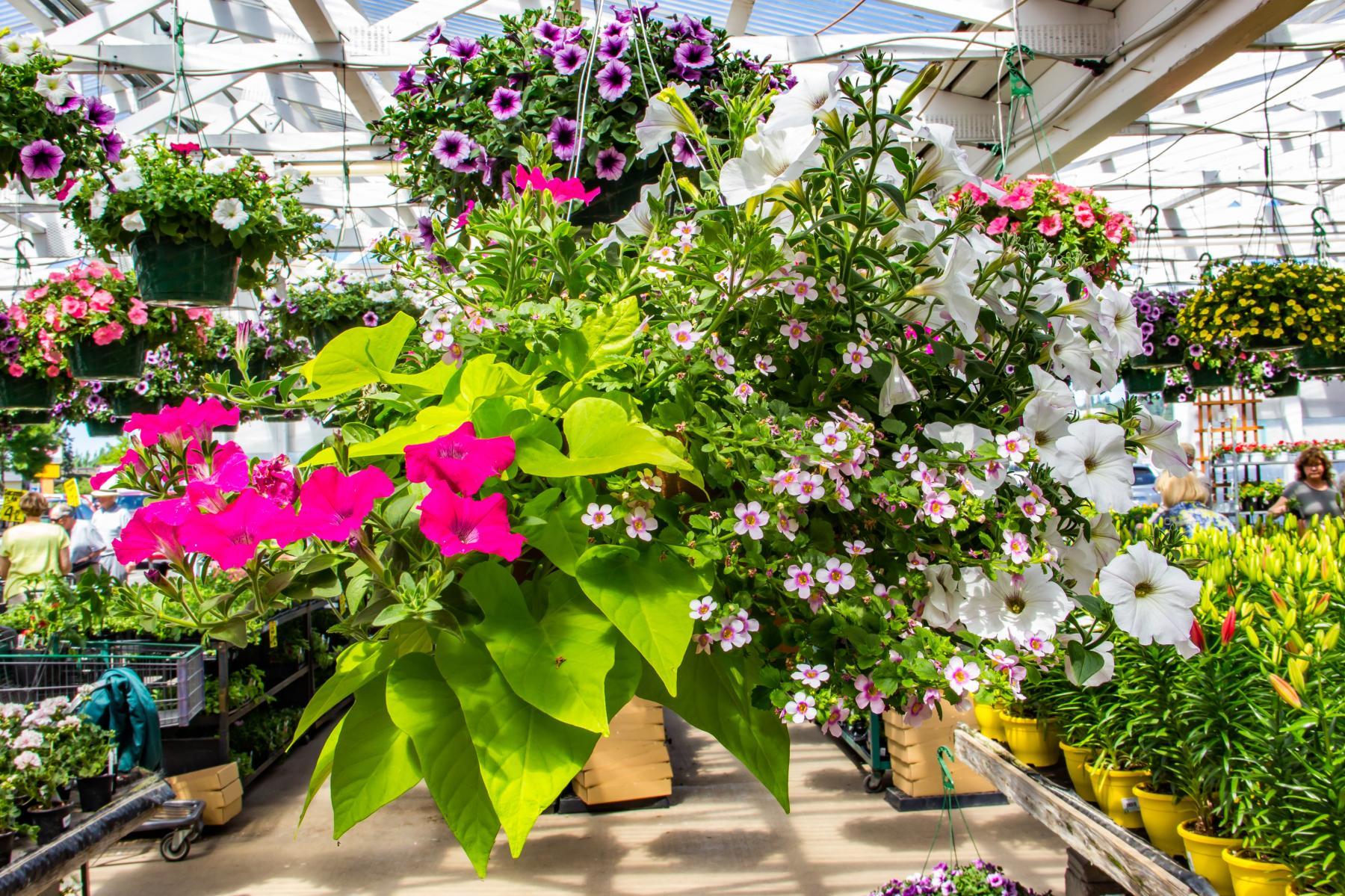 Kent Nursery Garden Center